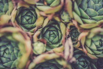 Artichoke can aid in detoxifying your body naturally